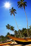 Tropical beach with palms and fishing boats in Sri-Lanka Royalty Free Stock Photo