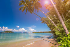Tropical beach with palms, Kood island, Thailand royalty free stock photo