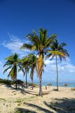 Tropical beach. Cuba - Havana beach. Royalty Free Stock Photo