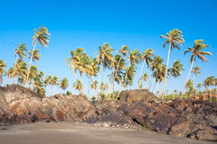 Tropical beach with palms tree against blue sky Stock Images