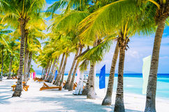 Tropical beach at Panglao Bohol island with chairs on the white sand beach with blue sky and palm trees. Travel Vacation Stock Photos