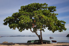 A tropical beach at Paqueta Island. A quiet tropical beach with a tree at Paqueta Island, Rio de Janeiro, Brazil Stock Images