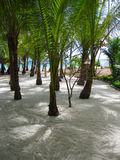 Tropical beach paradise Royalty Free Stock Images