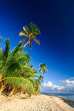 Tropical beach paradise Royalty Free Stock Image
