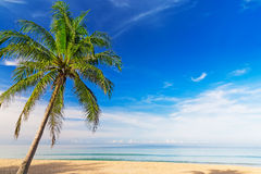 Tropical Beach Paradise Stock Photography