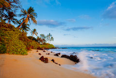 Tropical beach paradise. Tropical beach maui hawaii with palm trees and rocks Stock Photos