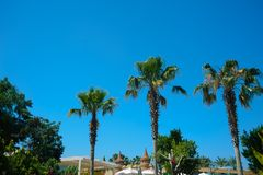 Tropical Beach Paradise with palm trees,. Blue sky and white house Royalty Free Stock Photos