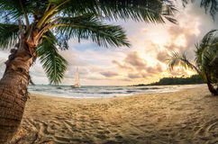 Tropical beach paradise at sunset. With warm-colored sand, palm trees, beautiful clouds and a sailing boat Royalty Free Stock Photos