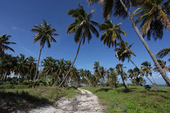 Tropical beach path. Beach path in Dominican Republic Stock Photography