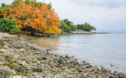 Tropical beach rock shore, Thailand Stock Images