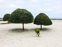 Tropical beach. With round shaped trees Stock Image