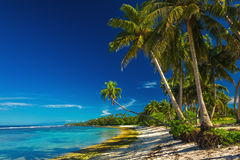 Tropical beach on Samoa Island with coconut palm trees Royalty Free Stock Photo