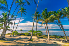 Tropical beach on Samoa Island with palm trees during late after Stock Images