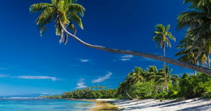 Tropical beach on Samoa Island with palm trees stock video