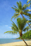 Tropical beach. A tropical sandy beach with palm trees Royalty Free Stock Image