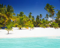 Tropical beach in Saona Island Stock Photos