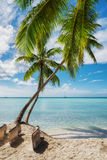 Tropical beach in Saona island, Dominican Republic Stock Images