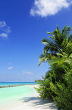 Tropical beach scene. Picture of tropical beach scene at maldives Royalty Free Stock Images