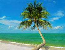 Tropical Beach Scene Royalty Free Stock Images