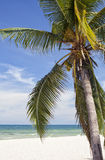 Tropical beach scene. Sunny tropical beach with palmtree Royalty Free Stock Images