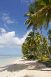 Tropical beach scene. Scenic view of palm tree lined tropical beach by ocean, Tobago island, Republic of Trinidad and Tobago royalty free stock photography
