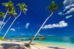 Tropical beach scene with coconut palm trees and jetty, South Pa. Cific, Samoa Islands Royalty Free Stock Image