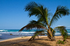 Tropical Beach Scene, Palm Tree, Kauai, Hawaii Stock Photography