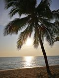 Tropical beach scene with palm cocunut tree and ocen Stock Photo