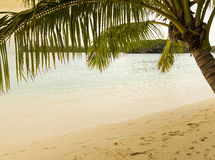 Tropical Beach Scene. With palm tree, sandy beach and clear water Royalty Free Stock Photography