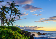 Tropical beach scene at sunset. Palm trees and local lush foliage. Ocean waves crashing onto lava rock.  Scenic tourist destination location Stock Photos