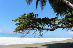 Tropical beach Scene. Waves crashing on the beach at Osa Peninsula Costa Rica with overhanging trees and palms Royalty Free Stock Photography