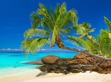 Tropical beach scenery in Thailand. Tropical beach scenery with Palm tree in Thailand Stock Photo