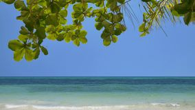Tropical beach scenery. Tilt down of the peaceful tropical beach in UHD stock footage