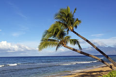 Tropical Beach Scenic Royalty Free Stock Photography