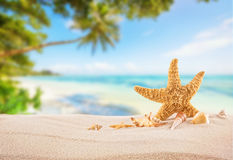 Tropical beach with sea star on sand, summer holiday background. Royalty Free Stock Image