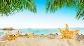 Tropical beach with sea star on sand, summer holiday background. Travel and beach vacation, free space for text royalty free stock image