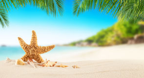 Tropical beach with sea star on sand, summer holiday background. Travel and beach vacation, free space for text or product placement stock photos