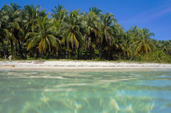 Tropical beach from sea surface. Unspoiled tropical beach with coconut palm trees viewed from sea surface, Caribbean, Panama Stock Photography
