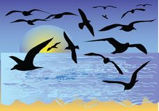 Tropical beach with seagull. Silhouette Stock Image