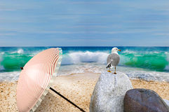 Tropical beach seagull on the rock Stock Photo