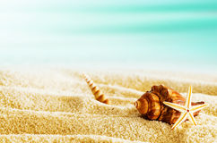 Tropical beach with seashells on a hot summer day Stock Photography