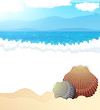 Tropical beach with seashells Royalty Free Stock Image