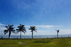 Tropical beach, Seaside. The trees in the picture is suitable for growing on the beach, mangroves and casuarina trees Royalty Free Stock Photo