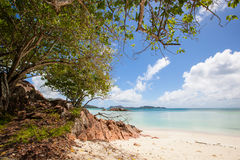Beach with tropical trees Royalty Free Stock Photography