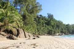 Tropical beach. Beach on Seychelles with palms, rocks and sand Royalty Free Stock Photos