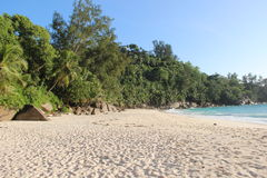 Tropical beach. Beach on Seychelles with palms, rocks, sand. Seaview royalty free stock image