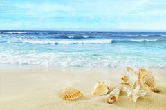 Tropical beach. Shells on the sand. stock image