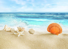 Tropical beach with shells. Tropical beach and splashing waves Royalty Free Stock Photo