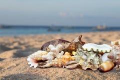 Tropical Beach Shells Royalty Free Stock Photo