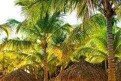Tropical beach shelter roof and palm tree basking in hot sunshine. Stock Photos